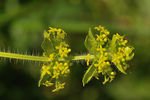 Title: Crosswort First time on TN