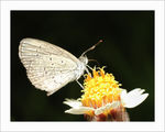 Title: Little butterfly on coatbutton