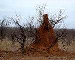 Title: Termite mound for Ingrid