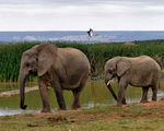 Title: Addo Elephant National Park
