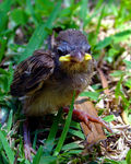 Title: Baby Sparrow for Anna