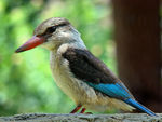 Title: Kingfisher for Loot