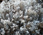 Title: ice crystals