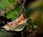 Title: Colorful Grasshopper Camera: Canon 5D Mark11