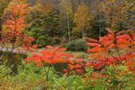 Title: Fiery Red Autumn Colors