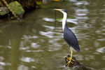 Title: Heron The Builder