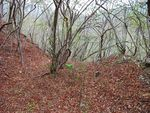 Title: Dry Forest