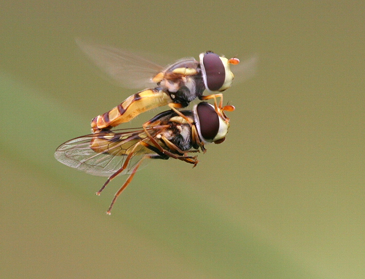 Fly Mate