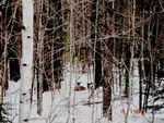 Title: Doe and little deer in snow