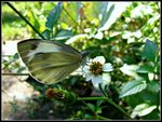 Title: A small butterfly on a tiny flower