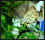 Title: Butterfly...