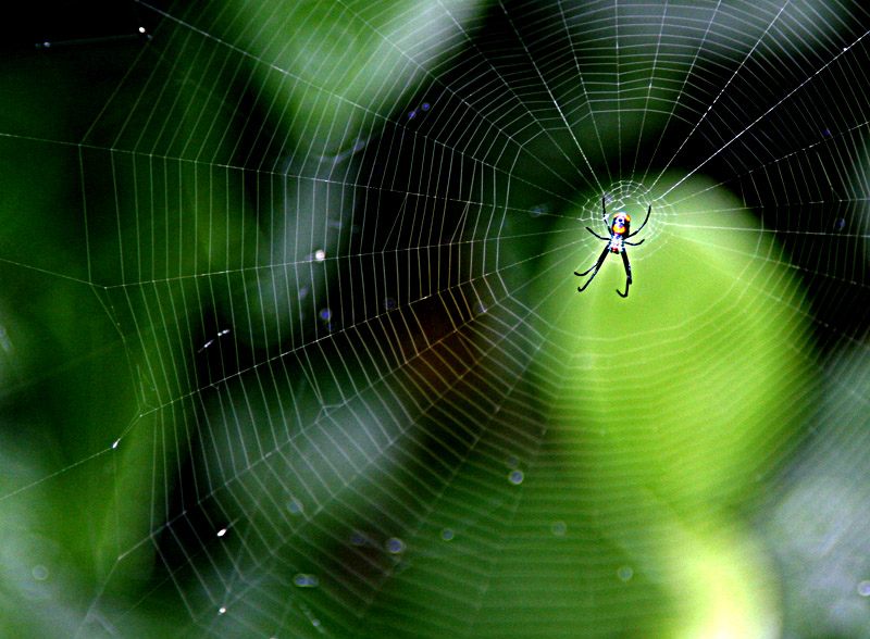 Web in Waiting