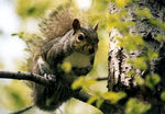 Title: A squirrel