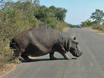 Title: Kruger Park encounter