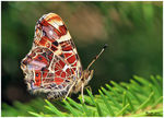 Title: Map (butterfly)Canon EOS 30 D