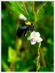 Title: Flying bee