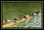 Title: Turtles in the Park