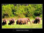 Title: The Asian Elephant Series 4