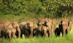 Title: The Asian Elephant Series 1