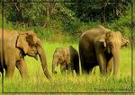 Title: The Asian Elephant Series 8