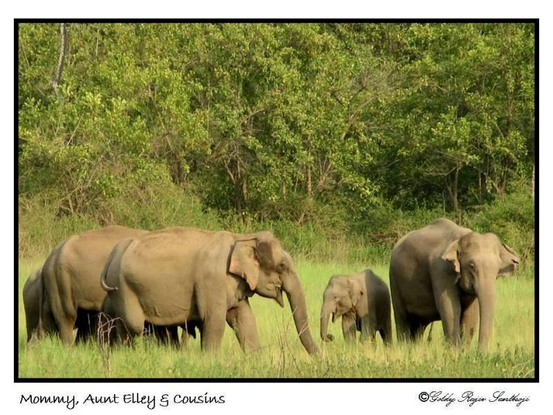 The Asian Elephant Series 10