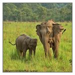 Title: The Asian Elephant Series 34