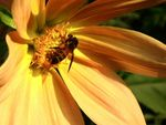 Title: Sunny Bee