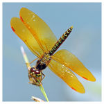 Title: my 1th dragonflyNikon D300