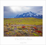 Title: The Hill's Alive