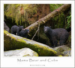 Title: Mama Bear and Cubs