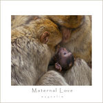 Title: Maternal Love