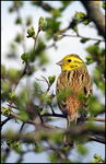 Title: YellowhammerSony Alpha DSLR A450