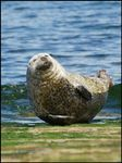 Title: Common Seal