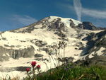 Title: Mount Rainier and Flowers