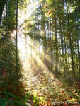 Title: Sun Beams in the Woods
