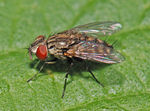 Title: Satellite fly