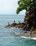 Title: Pelicans on Tortuga