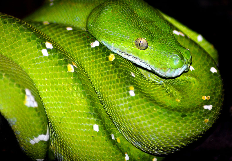 green tree snake air