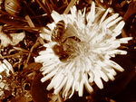 Title: bee and flower