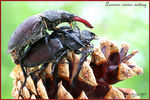 Title: Bug mating Camera: Canon EOS 300 D
