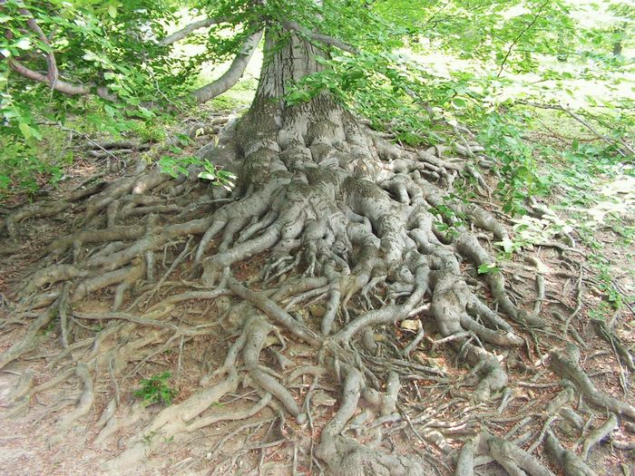 Roots ....