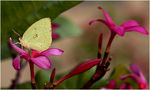 Title: Common Emigrant