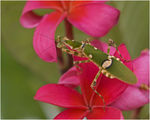 Title: Prayingmantis