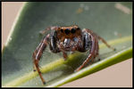 Title: Jumping SpiderCanon EOS 400D