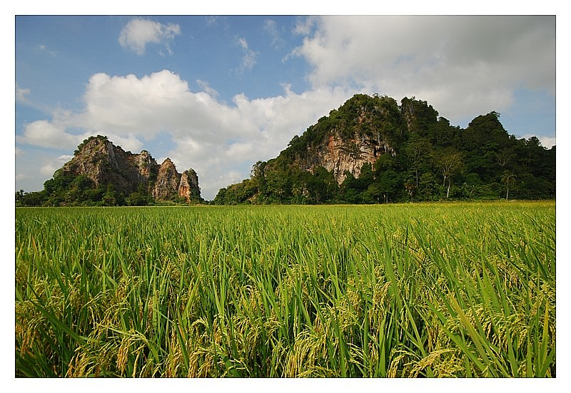 Padi Field Karst for Jamesp