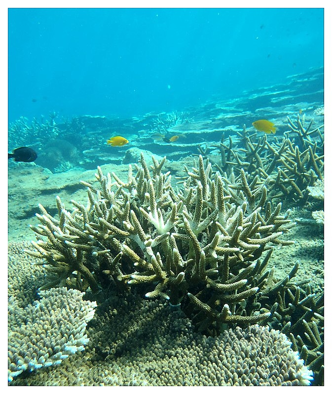 Shallow Water coral of Perhentian Island