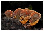 Title: Textured Bracket Fungi