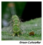 Title: Green Caterpillar