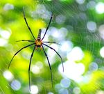 Title: Forest Spider