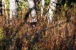 Title: Well Camouflaged